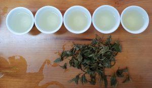 冬芽蜜香白茶-台灣製做