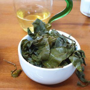 大禹嶺高冷春茶