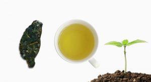 台灣造型高山茶小茶餅